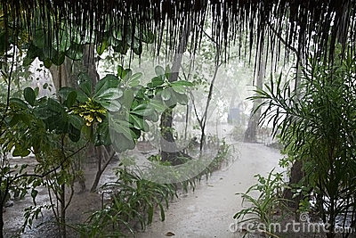 Tropical rain with path through misty park