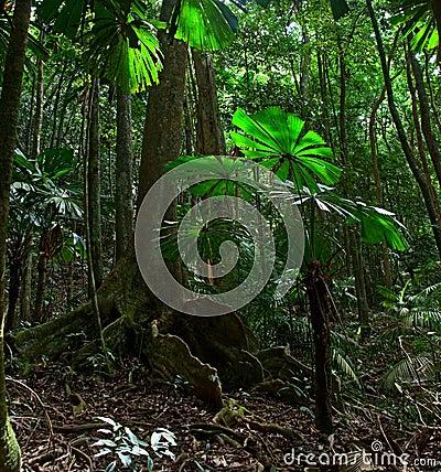Tropical rainforest national park Australia