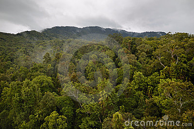 Tropical Rainforest in Queensland