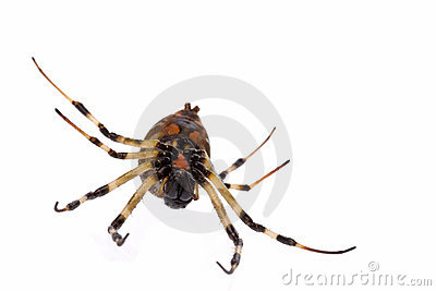 Tropical rainforest spider