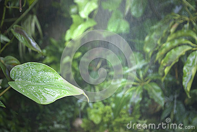 Tropical rainforest water wet leaf