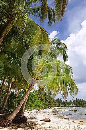 Tropical remote beach
