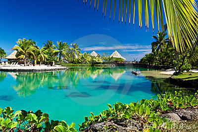 Tropical resort with a green lagoon and palm trees