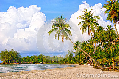 Tropical resort with many palm trees. Paradise nature