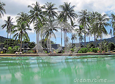 Tropical resort and palm trees