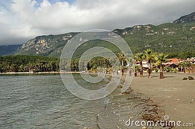 Tropical river shoreline
