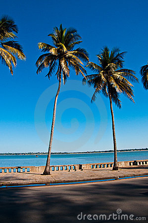 Tropical palm trees