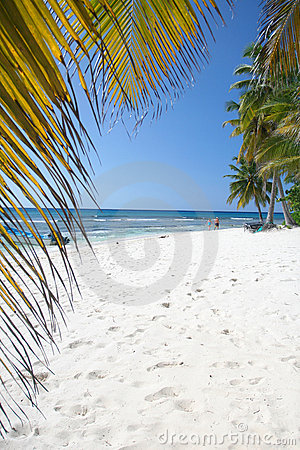 Tropical Sand Beach and Palm Trees