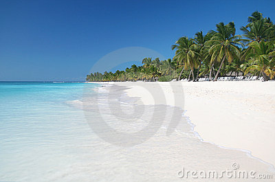 Tropical Sand Beach with Palmtrees