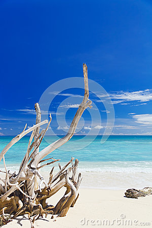 Tropical sandy beach with old dry wooden branch