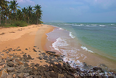 Tropical sandy beach with palm trees