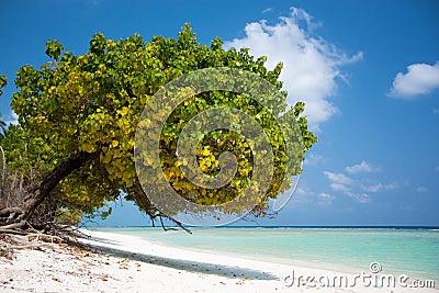 Tropical scene of bay beach