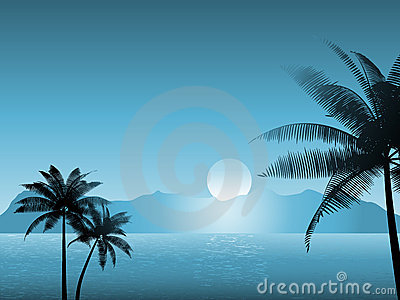 Tropical scene at night