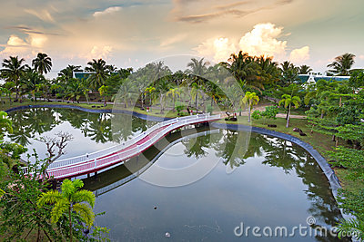 Tropical scenery of palm trees reflected in pond