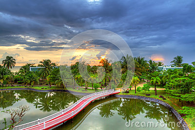 Tropical scenery of palm trees at sunset