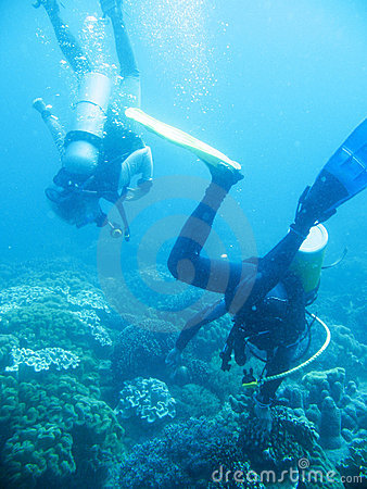 Tropical scuba diving adventure