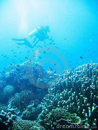 Tropical Scuba Diving Adventure Stock Images - Image: 4494964
