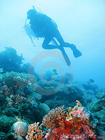 Tropical scuba diving adventure