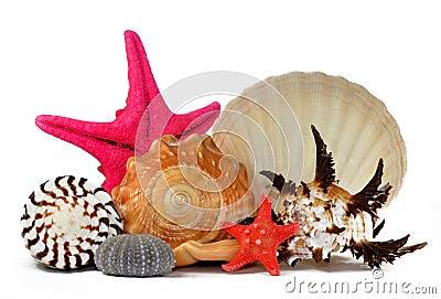 Tropical sea shells