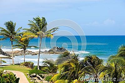 Tropical shore