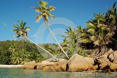 Tropical shoreline and palms