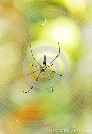 Tropical spider in web