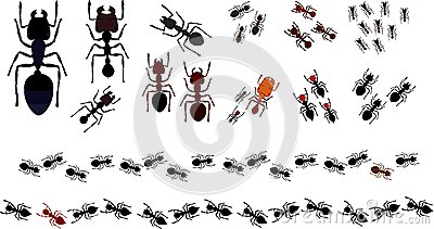 Tropical and Subtropical Ants