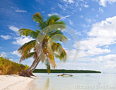 Tropical summer with palm trees