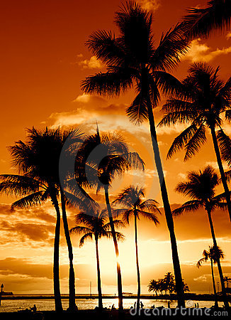 Free Tropical Sunset Royalty Free Stock Photography - 6571397