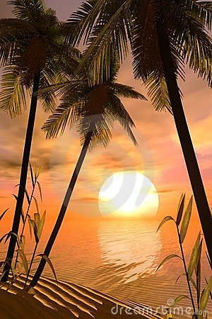 Free Tropical Sunset Royalty Free Stock Photo - 824515