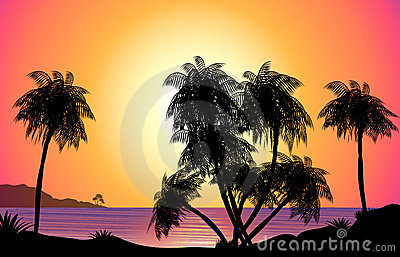 Tropical Sunset Illustration