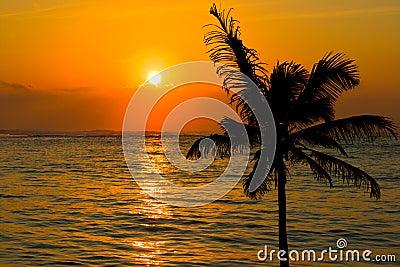 Tropical sunset scene