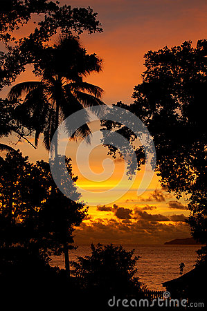 Tropical sunset silhouette