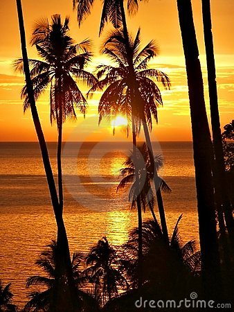 Free Tropical Sunset With Palm Trees Silhouette. Stock Photography - 187972