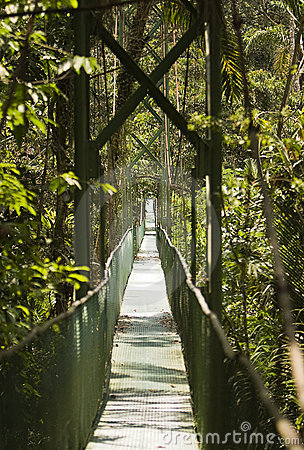 Tropical Suspension Bridge