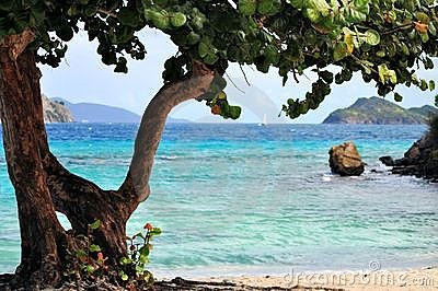 Tropical tree on a beach in St. Thomas