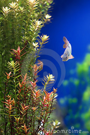 Tropical underwater plants and fish