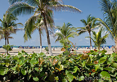 Tropical vegetation and beach