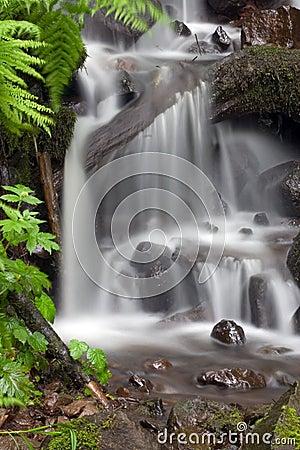 Tropical waterfall.