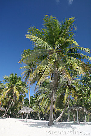Tropical White Sands Beach, Palm Trees