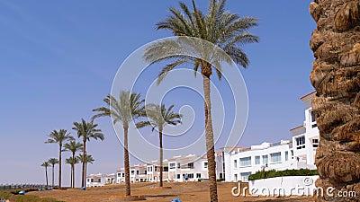 Tropikalne palmy przeciw hotelowi w Egipt i niebu Hotelowa powierzchowność w Tropikalnym kraju zdjęcie wideo