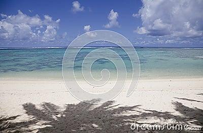 Tropikalni cieni plażowi palmowi drzewa