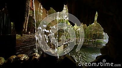 Tropikalny las deszczowy klauzura przy zoo zdjęcie wideo