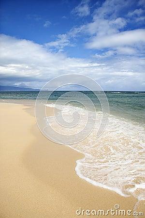 Tropikalny na plaży