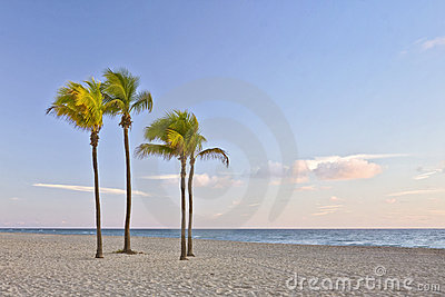 Tropikalny palmowy Florida plażowy raj Miami