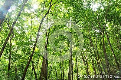 Tropikalny tropikalny las deszczowy