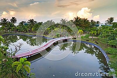Tropisch landschap van palmen dat in vijver wordt weerspiegeld