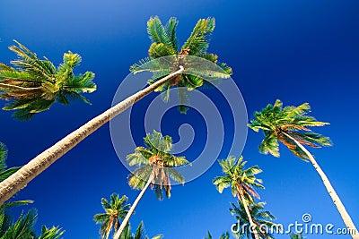 Tropisch palmparadijs