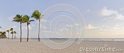 Tropisch paradijs in het Strand Florida van Miami met palm