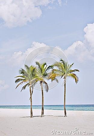 Tropisch strandparadijs in het strand Florida van Miami